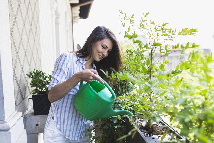 Agua para plantas